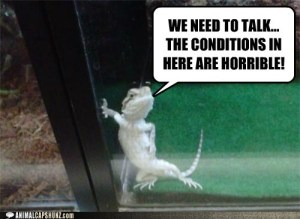 funny-animal-captions-how-do-i-file-a-formal-complaint